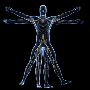 New Roots Herbal - Vagus Nerve